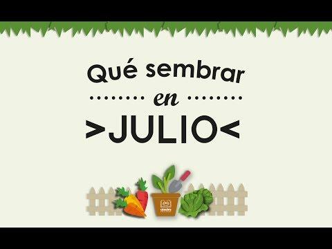 Calendario de huerta Julio