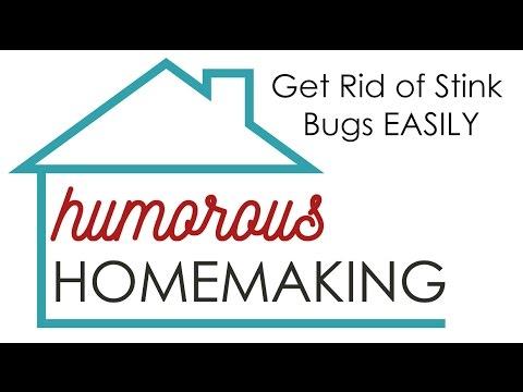 get rid of stink bugs easily youtube. Black Bedroom Furniture Sets. Home Design Ideas