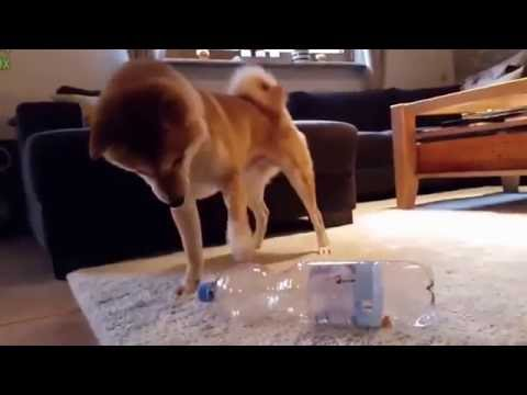 Funny Cat and Dog Videos 2016