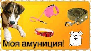 Амуниция моей собаки!!!Смотреть всем!