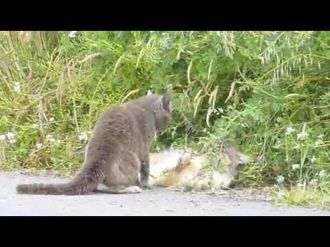 Epic Cat Fight