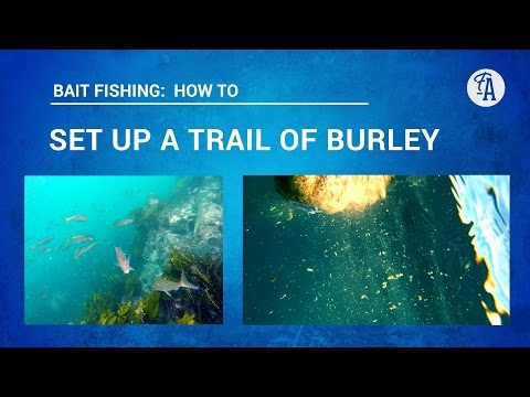 BAIT FISHING: How to set up a burley trail, to bring fish to you