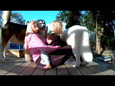 Dogs Reunited With Toddler