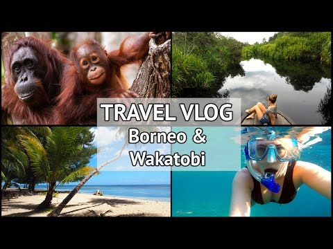 Orangutans in Borneo & Wakatobi Bajo Tribe | xameliax Travel Vlog | Indonesia