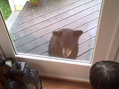 Curious baby bear comes to visit kitty!