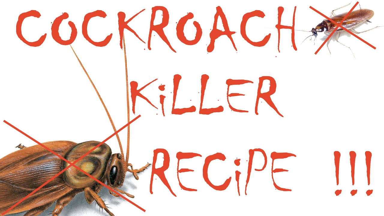 How To Get Rid Of Cockroaches Cockroach Remedy Youtube