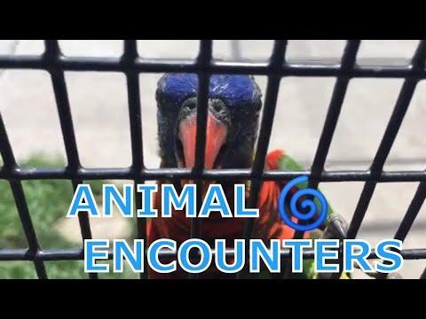 ANIMAL ENCOUNTERS - FEEDING ANIMALS