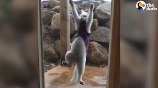 Cat Scales Screen Door   The Dodo