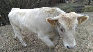 Бешеный бык))))))