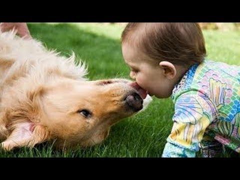Se Hunde Geben Babys Ksse Kompilierung 2014 HD YouTube