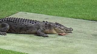 Australia Zoo Wildlife Warriors show pt3