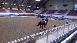 1ères rencontres de l'équitation de tradition française : C Henriquet