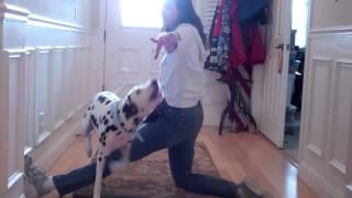 Devon's Dog Trick Training - Jump Over My K