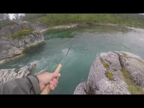 kongsfjord kalastus
