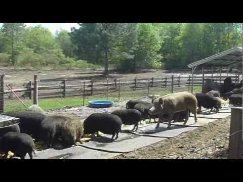 Feeding the Pigs at Rooterville: Part I