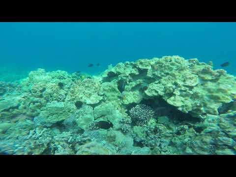 Hawaii: coral and yellow fishies