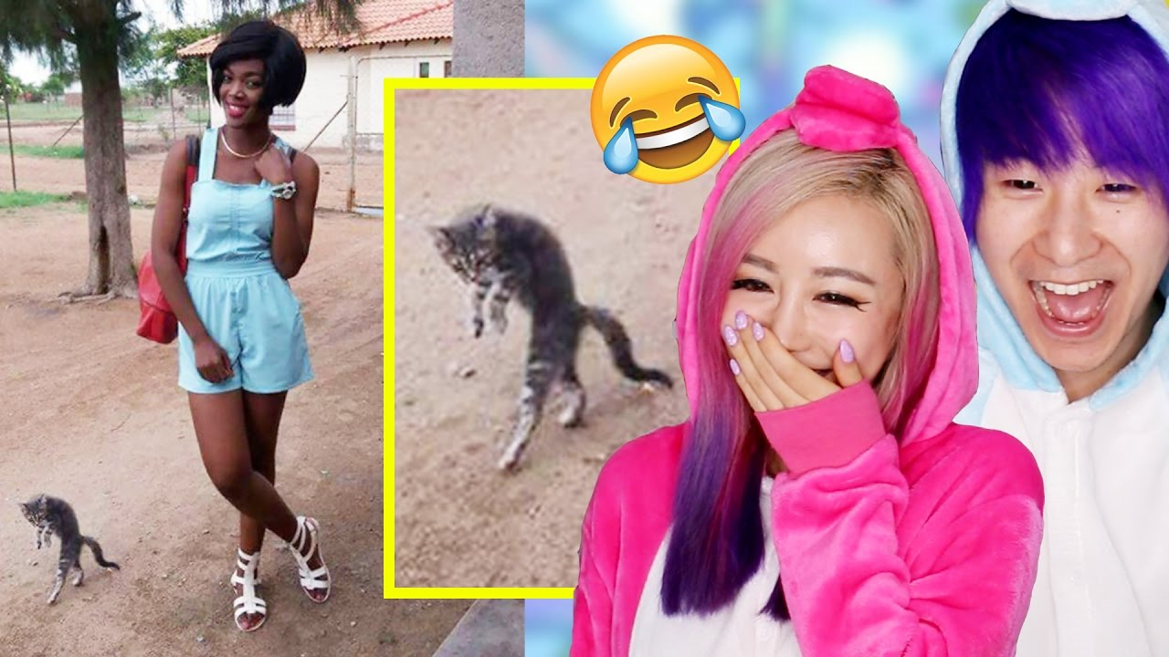 The Funniest Animal Photobombs Ever YouTube - The 39 funniest animal photobombs of all time