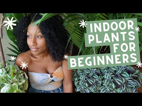 How To Be a Plant Mama 🌿 - Indoor Plants for Beginners
