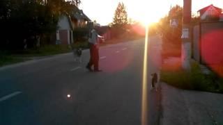 Кот Шахтёр нападает на собаку