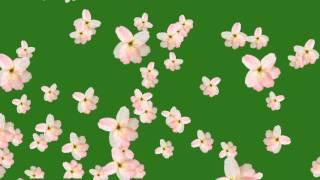 Flower fall green screen free hd