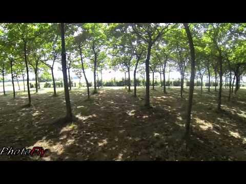 FPV Drone Tra la Natura verde