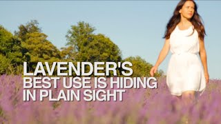 Lavender's Best Use is Hiding in Plain Sight