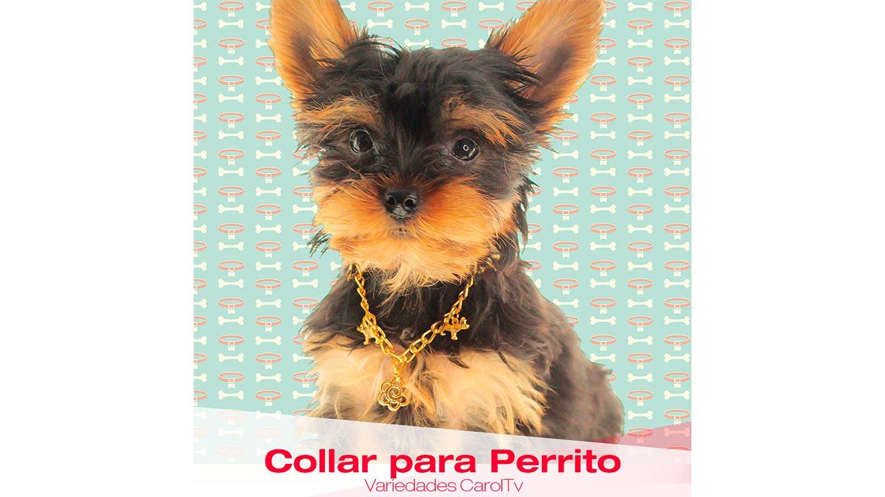 eca42617582d Aprende Rápido y Fácil Cómo hacer un Collar para Perrito - Variedades y  Fantasías Carol