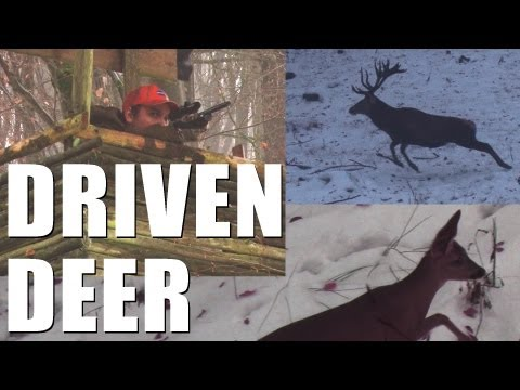Fieldsports Britain - Driven deer + boar, and decoying crows  (episode 160)