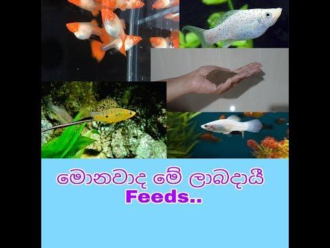 Ornamental Fish Feeds