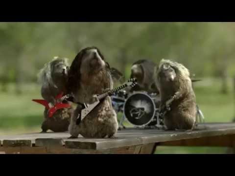 Le Festival des marmottes France 3