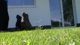 Германия. Обзор сауны и наши собачки)))(Германия. Обзор сауны и наши собачки))), 2015-08-02T17:51:55.000Z)