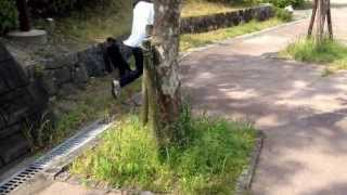 Teckel Minichua Dachshund Bidu E Yorkshire Terrier Lucky Andando Feliz
