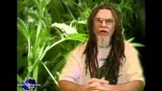Marijuana NUTRIENT DEFICIENCIES
