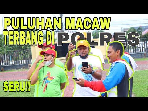 MACAW TERBANG DI POLRES || EPS 03