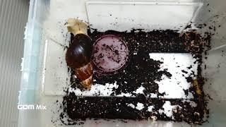 새끼(?) 달팽이 5형제