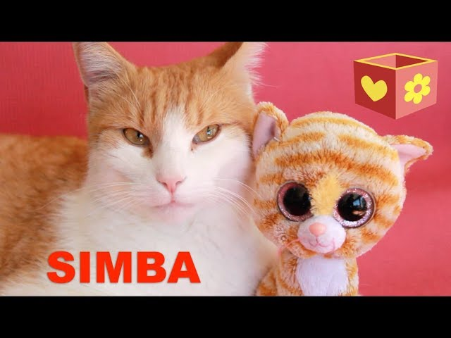 Cute cat | Simba and George | Bellboxes | Funny friendly animals | 8 |