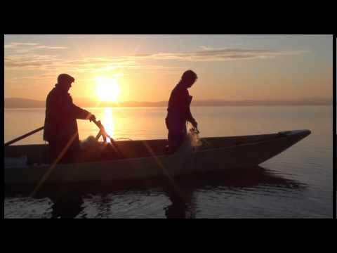 La Regina Del Lago. A Pesca Di Carpe Sul Trasimeno