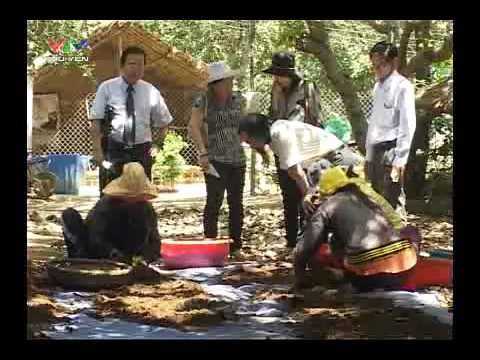 Kinh tế Nam Trung Bộ - Hiệu quả từ nuôi trùn quế trong sản xuất nông nghiệp
