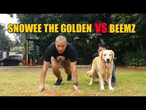 SNOWEE THE GOLDEN VS BEEMZ ARYO | 33 METER SPRINT !