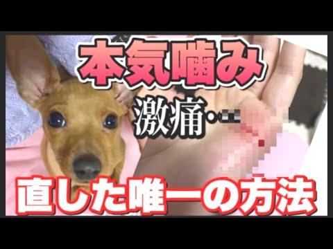 【犬の噛み癖を直す方法】本気噛みから〇〇で直したしつけ方