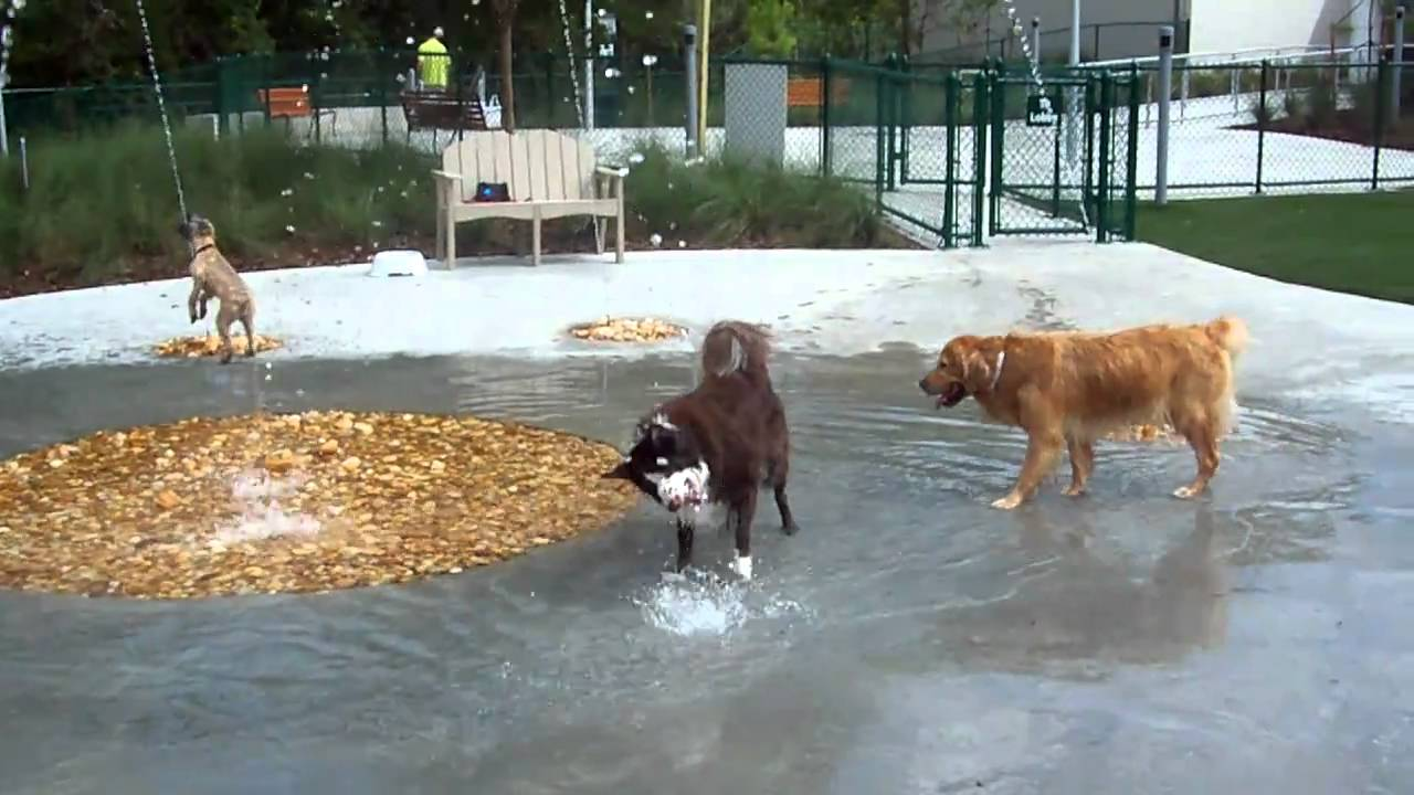 Playing in the water at best friends pet care at walt for Pet boarding near disney world