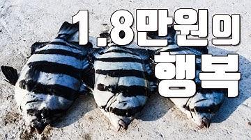[다리tv] 가성비 최고 섬 여행!!! 낚시&펜션&캠핑!!! 18,000원으로 즐기는 여유!!! ☆ 돌돔, 농어, 갈치, 오징어 ☆