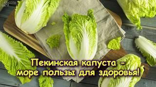 ПЕКИНСКАЯ КАПУСТА - море пользы для здоровья!