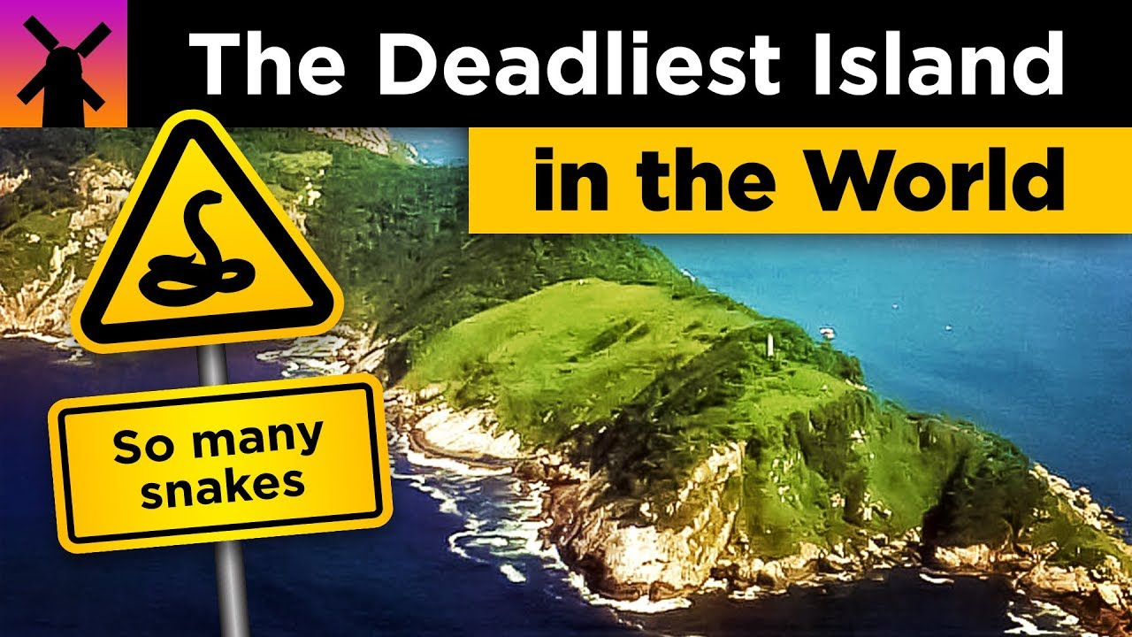 The Deadliest Island in the World: Snake Island Explained
