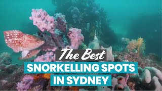 The Best Snorkelling in Sydney