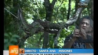 Vivo en Argentina - Santa Ana, Misiones - 07-11-11 (2 de 4)