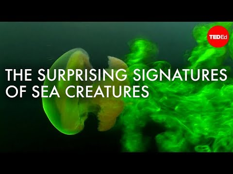 Video image: The surprising (and invisible) signatures of sea creatures - Kakani Katija