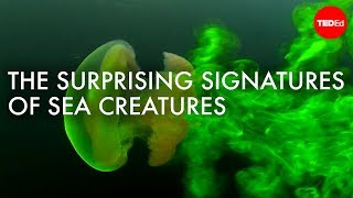 The Surprising (and Invisible) Signatures Of Sea Creatures - Kakani Katija