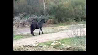 Mon petit cheval de fer ♥