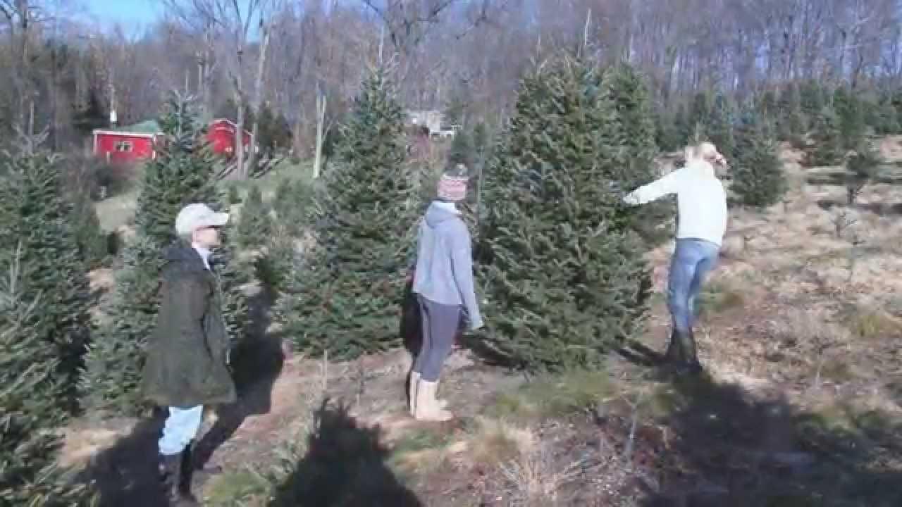 Beezup Christmas Tree Farm - Clarks Summit, PA - YouTube